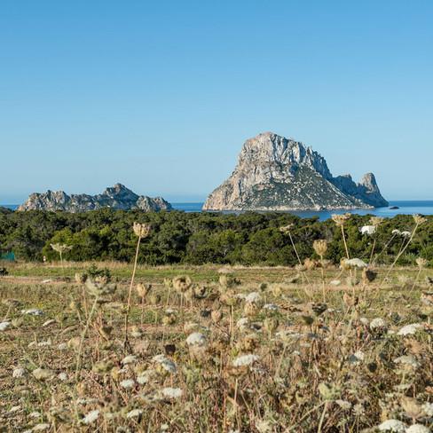 Petunia Ibiza Hotel - Nature Surroundings