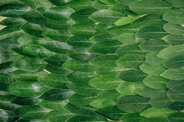 Sustainability-Leaves-Europe.jpg