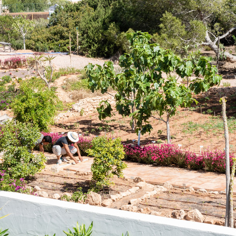 Petunia-Ibiza-Huerto.jpg