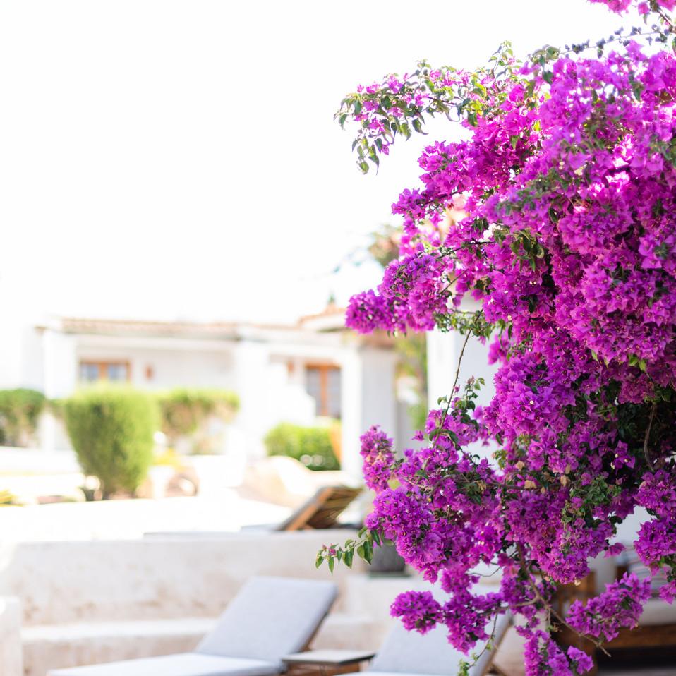 Petunia Ibiza Hotel - Bougainvillea Around The Hotel