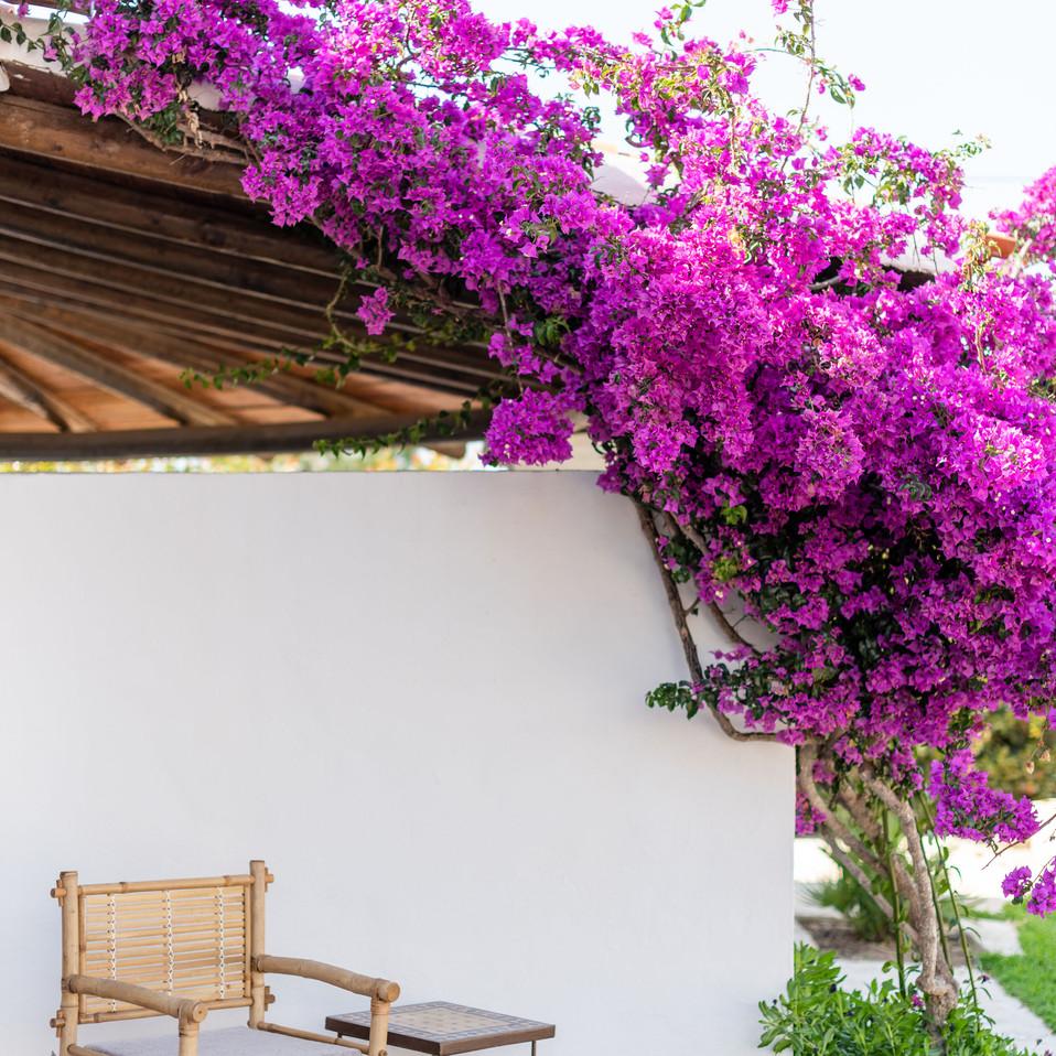 Petunia Ibiza Hotel - Bougainvillea Corners