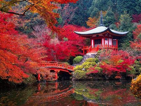 jardin-japonais-à-Kyoto.jpeg