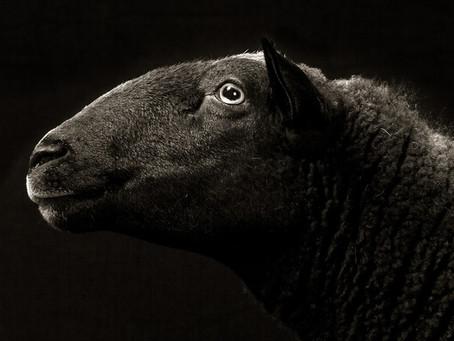 Sheep: A Lot More Than 'Baaaa.'