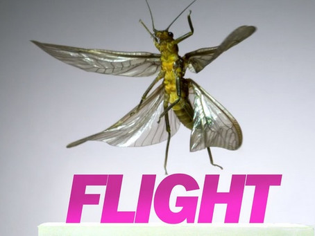 The Incredible Flight Of Insects