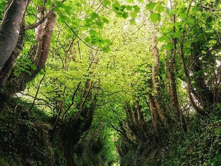Mystical & Magical Sunken Lanes