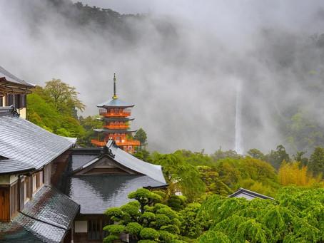 Tour Japan And Make Sencha Tea, Japan's Iconic Beverage