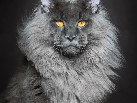 The Most Beautiful Cats In The World? You Be The Judge!