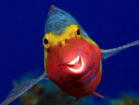Humorous Wildlife Photos: A Smile To Start Your Day
