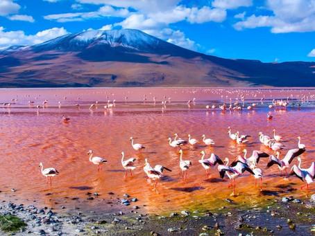 Bolivia! Tour This Amazing Country & Make Salteñas, The Favorite Dish!