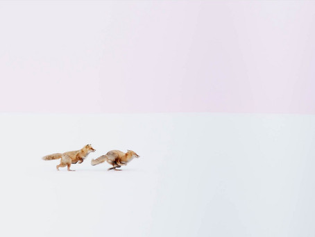 Hiroki Inoue's Magnificent Images Of Wild Japan: Foxes, Anyone?