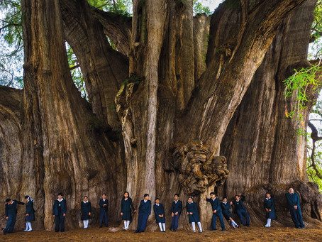 The World's Most Iconic, Sacred, And Unusual Trees