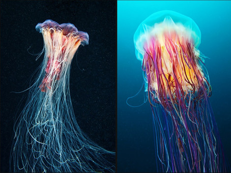 The Awesome Beauty Of The Ocean's Deep, Coldwater Creatures