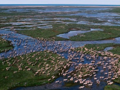 The World's Most Epic Animal Migrations? Maybe Not What You Think.