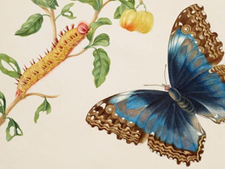 Butterflies And The Woman Who Fought Superstitions About Them