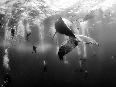 The Spectacular Ocean World Of Anuar Patjane Floriuk