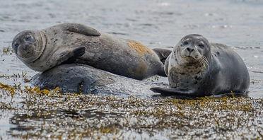 Seals-unsplash-696x370.jpg