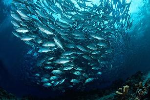6467-salmon.jpg