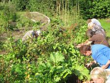 Vrijwilligers gezocht voor permacultuurtuin Haren