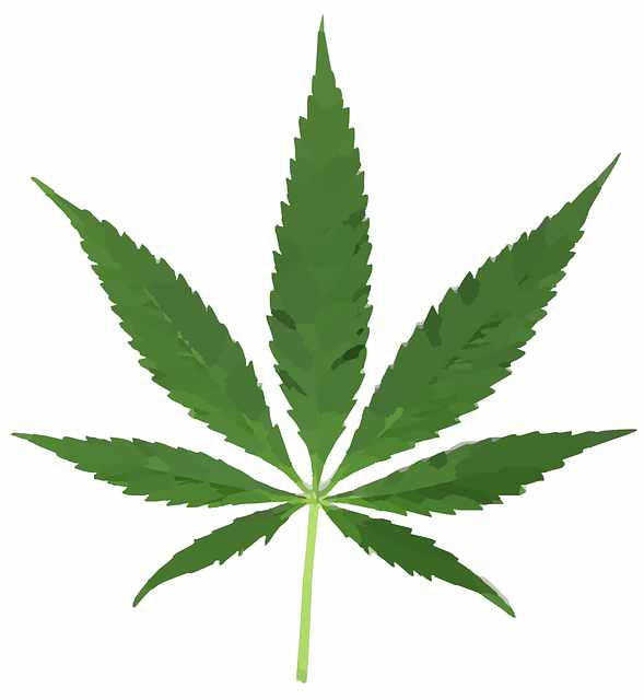 cannabis-297097_640.png
