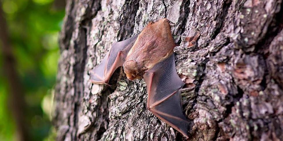 Bats of North Texas