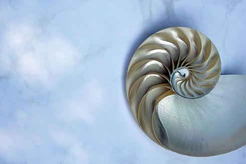 shell pearl nautilus Fibonacci section spiral pearl symmetry half cross golden ratio shell