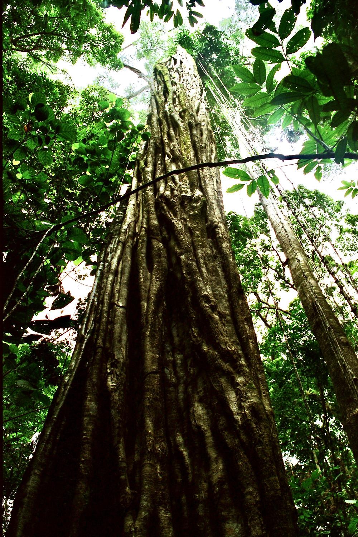 Foto des Amazonas-Regenwaldes