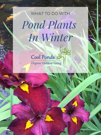 pond plants in winter.png