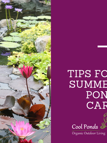 Tips For Summer Pond Care