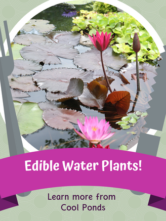 Edible Water Plants.png