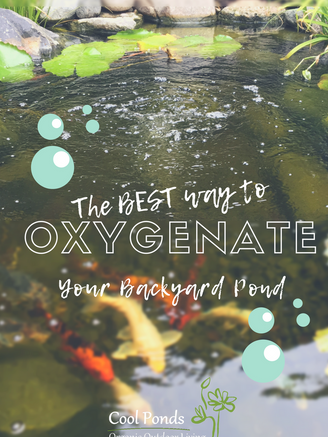 The Best Way to Oxygenate Your Pond