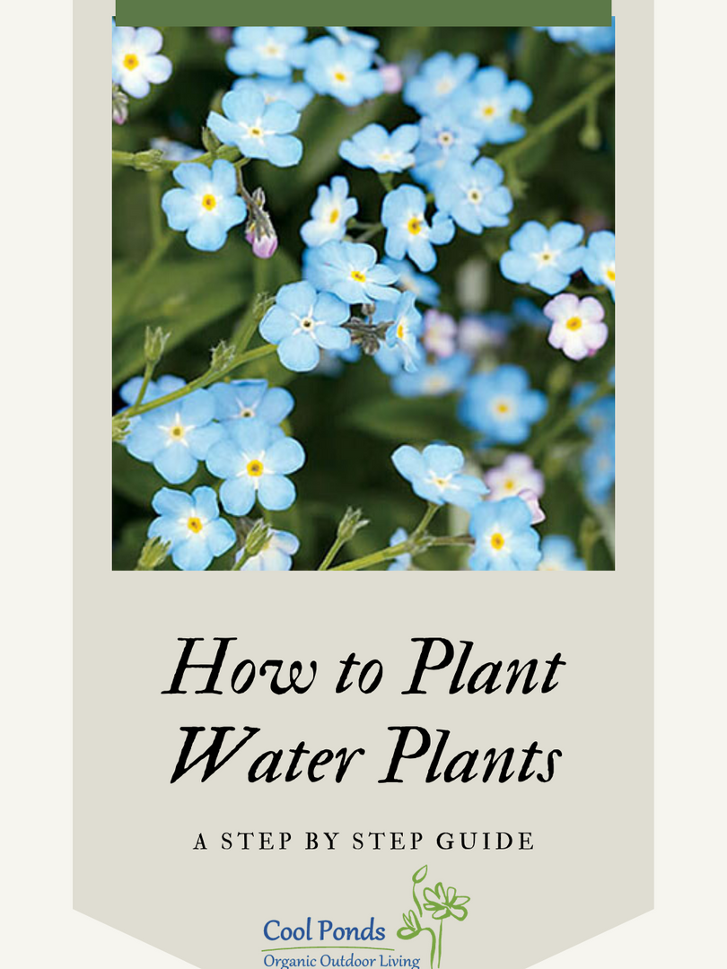 How to Plant Water Plants