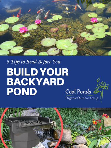 5 Tips Before You Build Your Pond