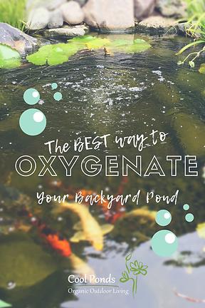 how to oxygenate your backyard pond