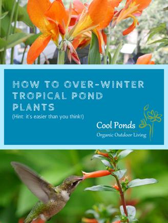 overwintering aquatic plants.png