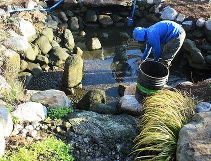 cool ponds professional pond maintenance