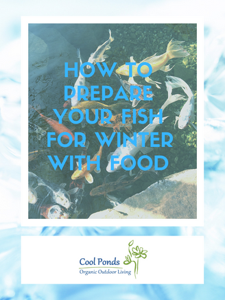prepare fish for winter with food.png