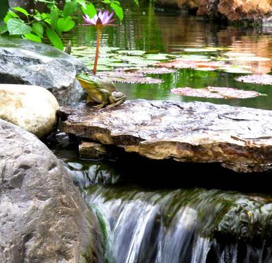 cool ponds landscape pond