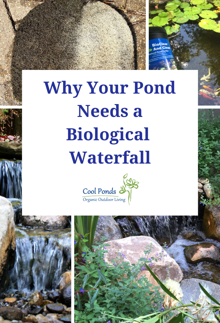 Why Your Pond Needs a Biological Waterfa