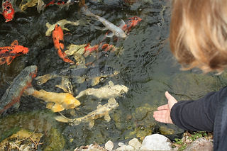 pond owner guide fish