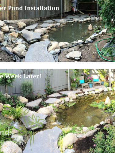 before after pond finishing.png
