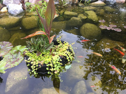 pond supplies in indianapolis