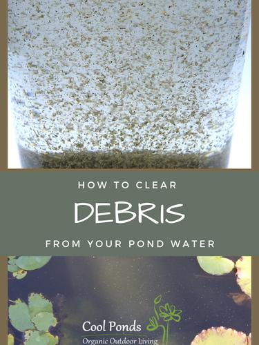 cool ponds blog debris