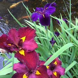 aquatic plants at cool ponds