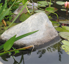 new pond owner help