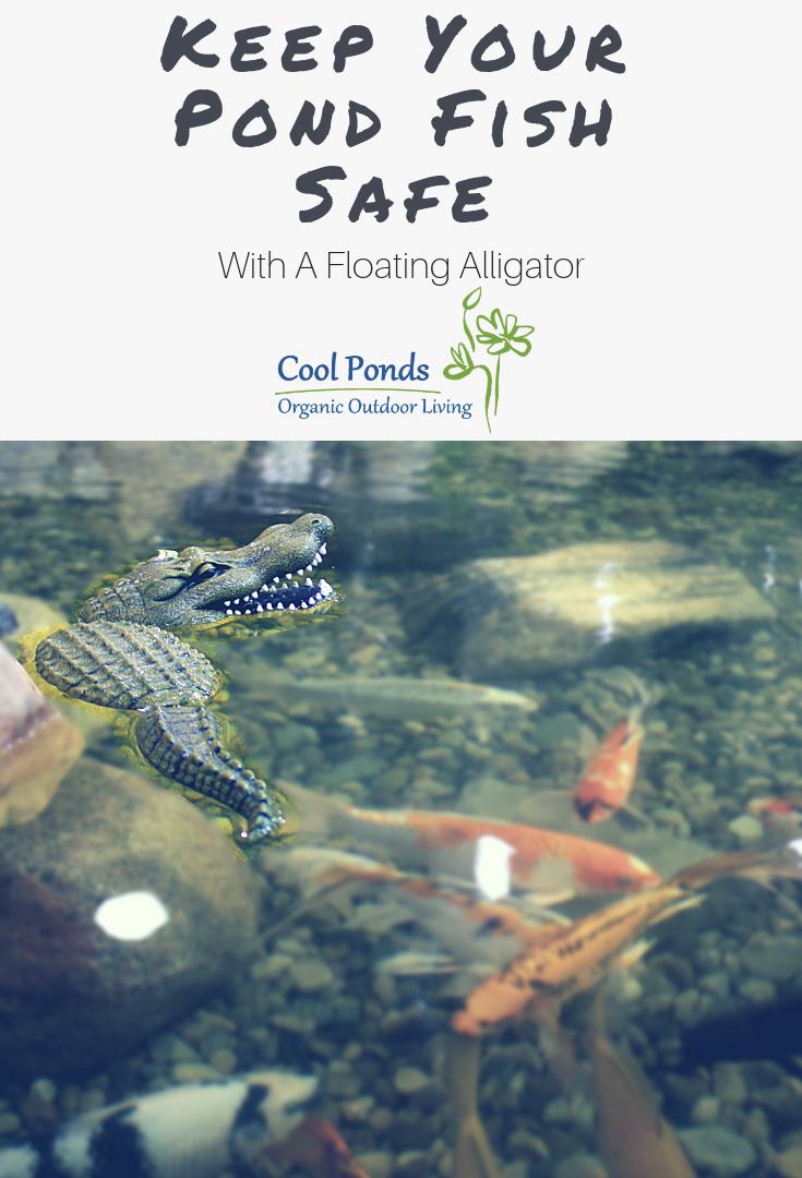 keep your pond safe.png