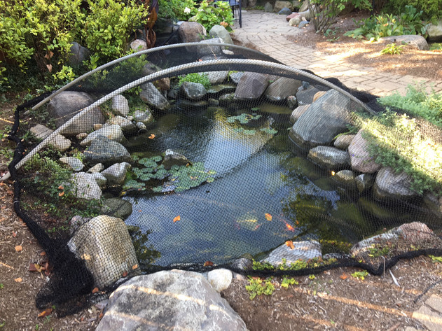 fall pond leaf netting service indianapolis