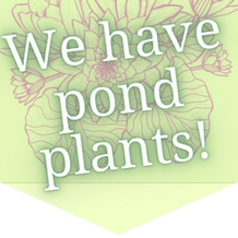 pond plants 3.png