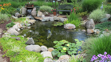 pond owner guide what is a pond