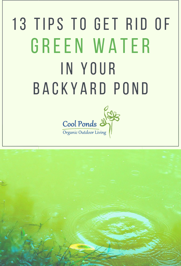 13 tips to get rid of green water.png