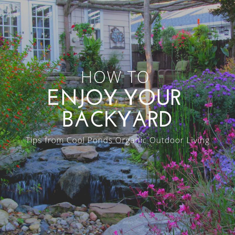 How to Enjoy Your Backyard